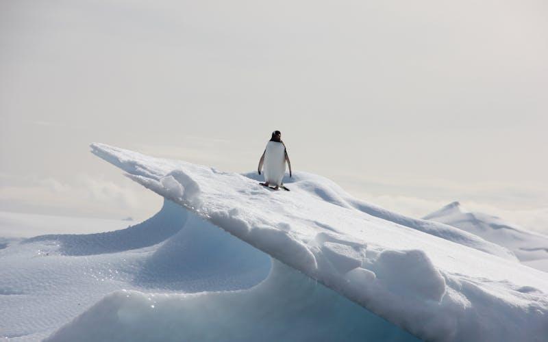 South Pole | Walpole member